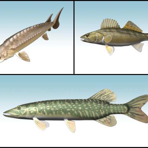 fish3D_yg