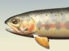 goldentrout